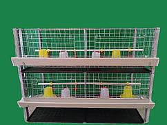 Клетка для содержания бройлеров двухэтажная. ВИДЕО