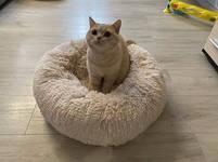 Лежак для кошек и собак, лежанка-подушка, кровать S 40 см до 2 кг бежевый цвет, фото 7