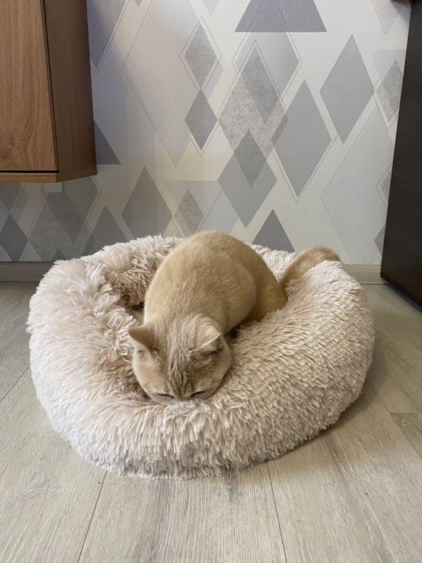 Лежак для кошек и собак, лежанка-подушка, кровать M 50 см до 4 кг светло-бежевый цвет