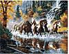 Va-1605 Коні мчать у воді по осінньому лісі