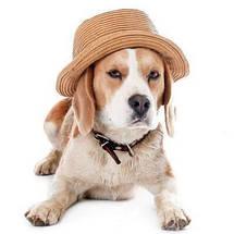 Головні убори для собак