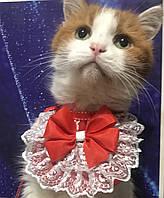 Одежда - манишка для кошек или собачек