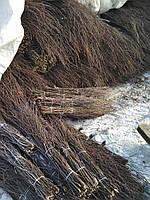 Метла березовая высший сорт, фото 1