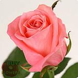 Роза лососевого цвета Анна Карина 40 - 110 см, фото 6