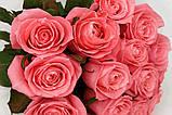 Роза лососевого цвета Анна Карина 40 - 110 см, фото 7