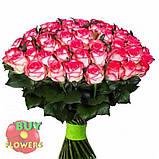 Роза двухцветная Джумилия 40 - 100 см, фото 6