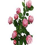 Леди Бомбастик роза веточная, фото 6
