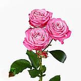 Леди Бомбастик роза веточная, фото 2
