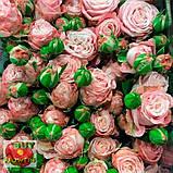 Роза Мадам Бомбастик ветка, фото 3