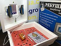 Инкубатор Рябушка-2 70 яиц Аналоговый
