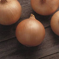 Семена лука Кенди F1 250 000 сем Seminis / Семинис