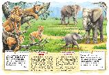Розвивальні книжки на картоні Африканські тварини., фото 3