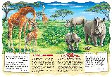 Розвивальні книжки на картоні Африканські тварини., фото 4