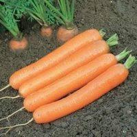 Морковь Дордонь  F1  1 гр