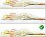 Ортопедический матрас с мультизонным независимым пружинным блоком Mount / Маунт серии Naturelle, фото 4