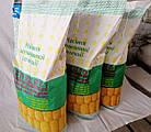 ДН Славица ФАО 250 Семена кукурузы, фото 2
