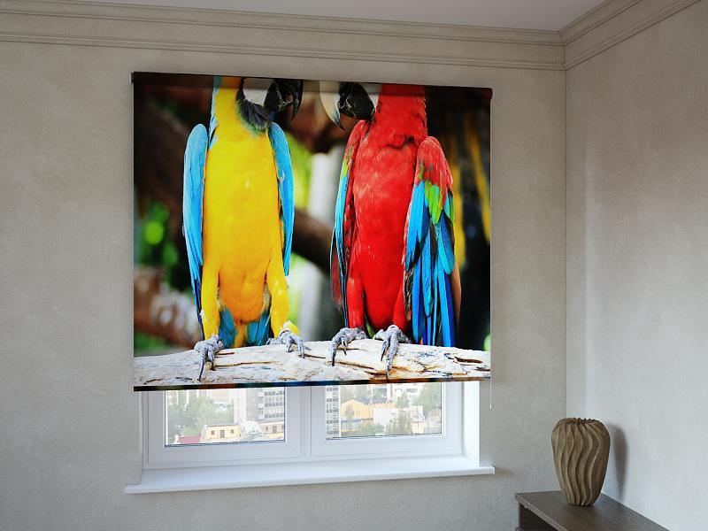 Рулонні штори з фотодруком кольорові папуги 3д
