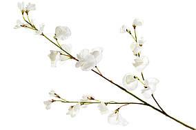 Декоративна гілка Запашного горошку, 71см, колір - білий BonaDi 709-501