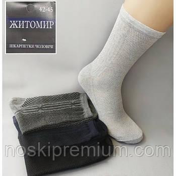 Шкарпетки чоловічі бавовна з сіткою Житомир, Україна, розмір 42-45, асорті, 080-009