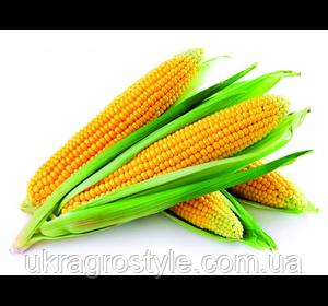 Збруч ФАО 310 Семена кукурузы
