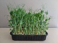 Лотки для вирощування мікрозелені, низький ( 35 мм)