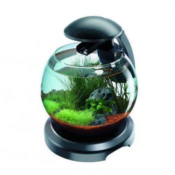 Аквариум Tetra Cascade Globe для петушка и золотой рыбки, черный 6,8 л