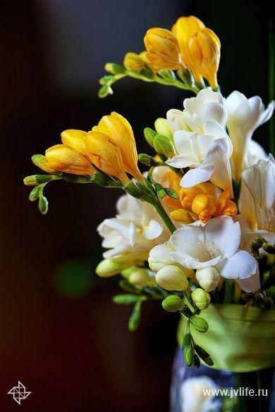 Отдушка моно аромат для парфюмерии Тубероза 2 (LUX)