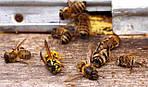 Какие шаги предпринимает владелец пасеки или уполномоченное им лицо и Комиссия при отравлениях пчёл?