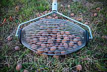 Ролл для сбора грецкого ореха, орехосборник, плодосборник, фото 2