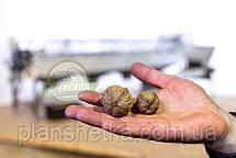 Роторный (барабанный) калибратор грецкого ореха, фото 2