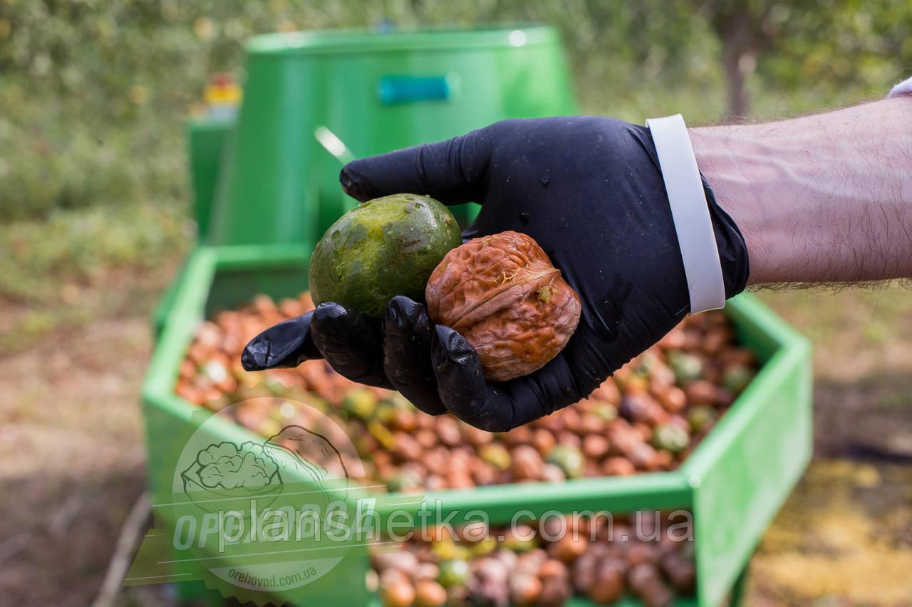Промислова лінія для миття волоського горіха