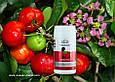 Ацерола Вивасан Витамин С тропическая вишня 60 шт, фото 2