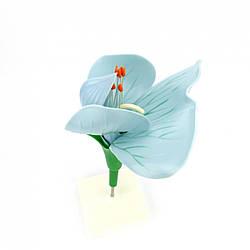 Модель об'ємна «Квітка гороха»