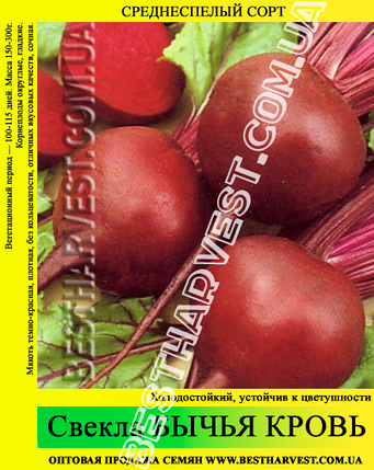 Семена свеклы «Бычья Кровь» 0.5 кг, фото 2