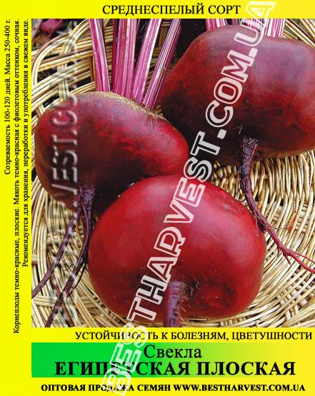 Семена свеклы Египетская плоская 0.5 кг
