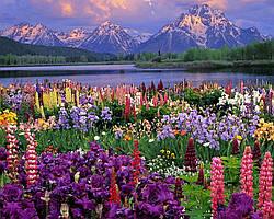 """Набор для рисования картин по номерам (раскраска) """"Весна в Альпах"""""""