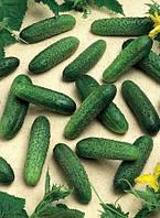 Семена огурца Мирабелла F1 1000 шт