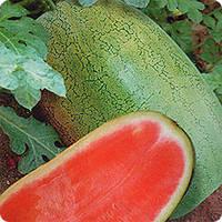 Арбуз Чарлстон Грей F1 10 семян