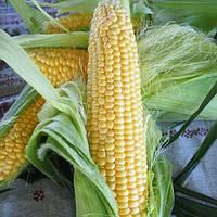 Мессенджер Ф1 5000 сем. кукуруза Семенис