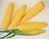 Кукуруза сахарная Ледженд 5 грамм