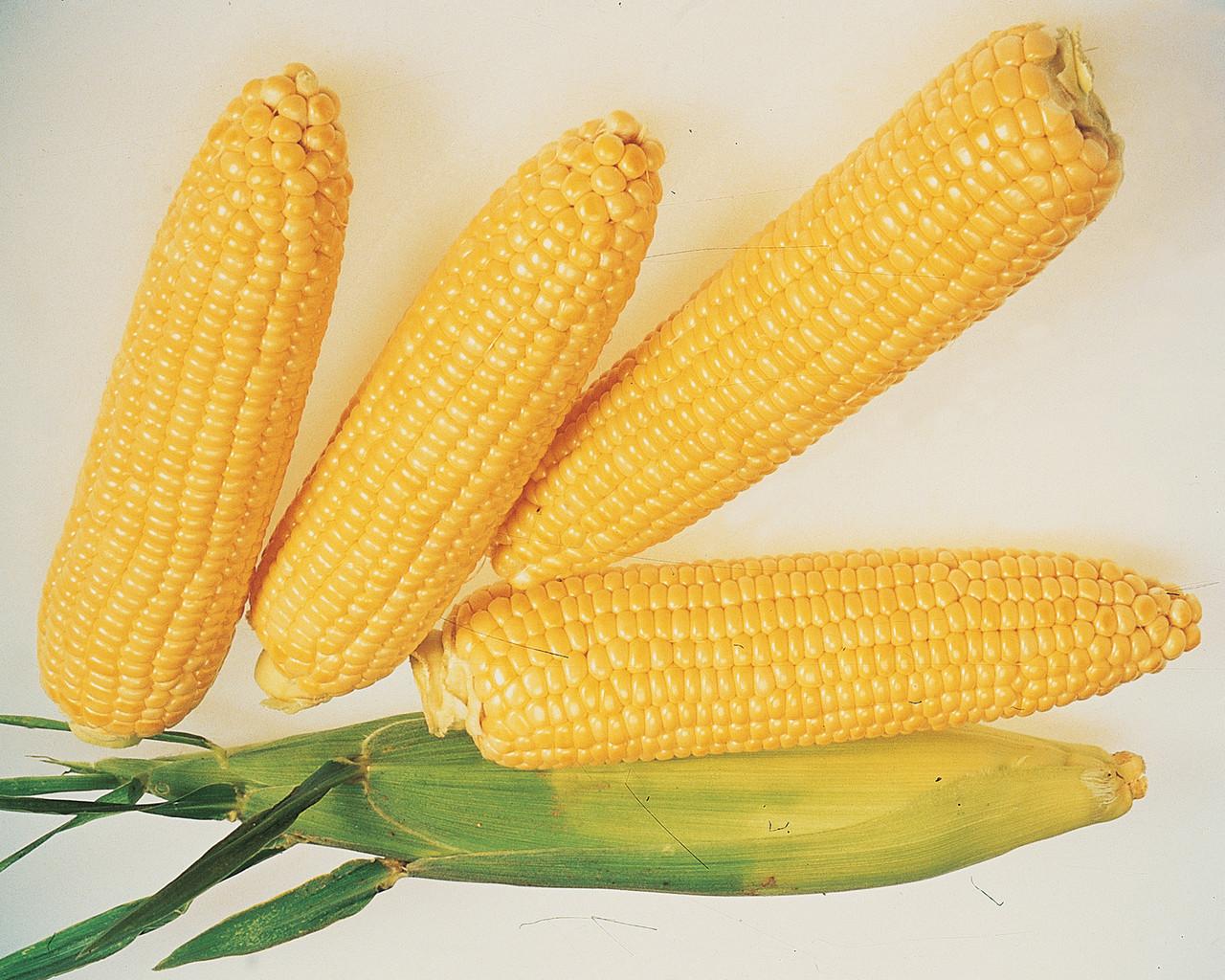 кукуруза сахарная картинки работодателю будет