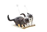 Лежанка для котів і кішок на вікно, балкон. Полиця для домашніх тварин Sunny Seat Сани звт до 22 кг, фото 6
