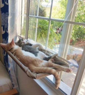 Лежанка для котов и кошек на окно, балкон. Полка для домашних животных Sunny Seat Сани сит до 22 кг