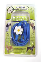 Шлея и поводок для собак Coastal Daisy Combo, нейлон, голубой | 0,8 см.Х25-35 см.