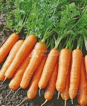 Морковь Ласуня, 2 г