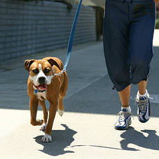 Товары для прогулок и путешествий с животными, общее