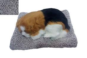 Собачка/кішечка на подушці G2 (маленька) (150)