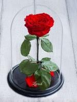 Декоративна троянда в колбі в подарунок Raspberry №A78 з LED подсведкой червона, від батарейок