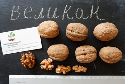 Семена грецкого ореха.