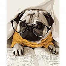 """Набор для рисования, картина по номерам """"Мопс в очках"""", 40*50 см., SANTI"""